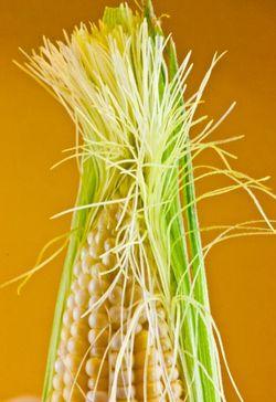 VEGETABLE corn silk