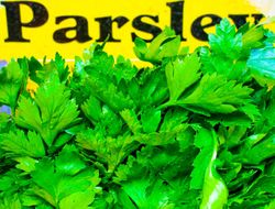 Parsley and signe