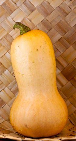 VEGETABLE butternut squash