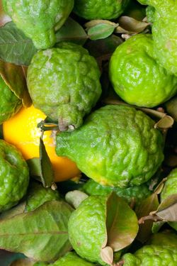 FRUITS kaffir limes