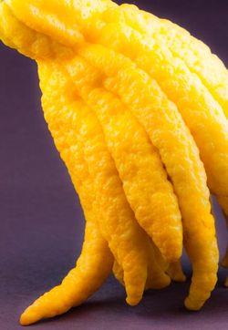 FRUITS citrus buddahs hand