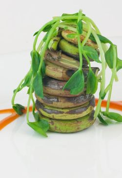 VEGETABLE fiddlehead ferns with bbq sauce