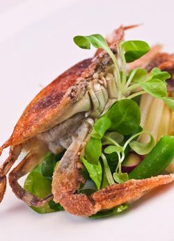 FISH soft shell crab with mache