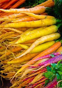 Carrot rainbow