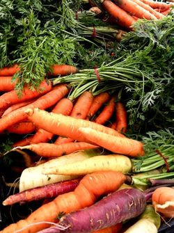 SUSTAINABILITY carrots 2