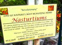 Nasturtium signe
