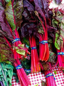 SWISS CHARD bunches