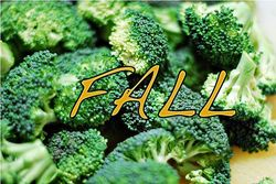 Broccoli-pic(FINAL)