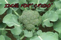 Broccoli-2(IDEALFORCRUDO)
