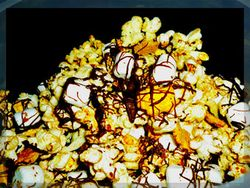 Popcorn_with_chocolate