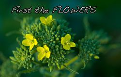 Broccili_flowers(1)-