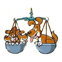 Scake-Waage-Hund(1)