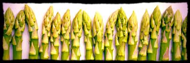 Asparagus row