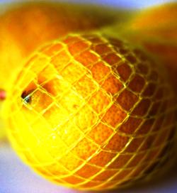 Lemon in net 1