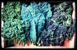 Kale x3