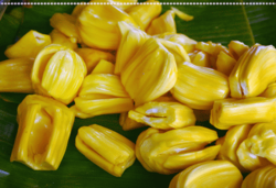 02 jackfruit fruit