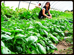 01 baisl harvest