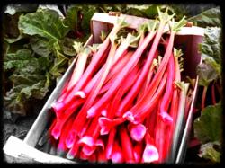 04 rhubarb pic
