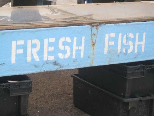 fish stand USQ